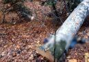 Orman işçisi kestiği ağacın altında can verdi