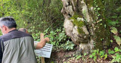 Ağacın üzerindeki figür şaşırttı! Koruma altına alındı